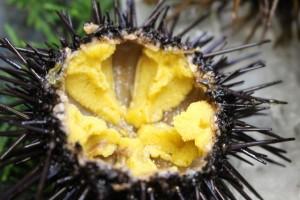uni sea urchin