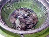 clam-miso-soup_01