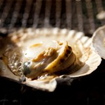 What is Hotate (Japanese Scallop) ?