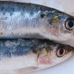 What is Iwashi (Sardine) ?