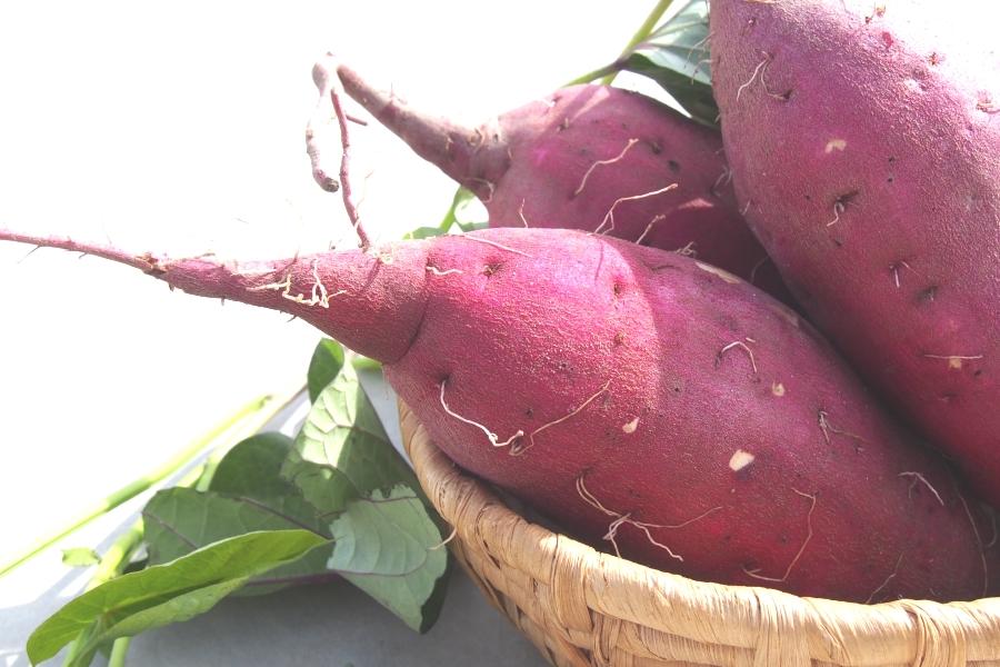 What Is Satsuma Imo Sweet Potato We Love Japanese Food